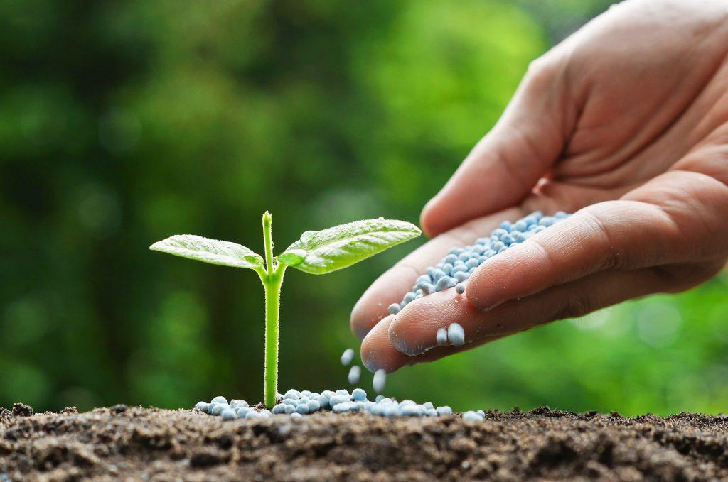 بهترین کود برای رشد سریع درختان میوه_ کشاورزی ایران
