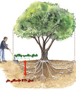 چالکود - کشاورزی ایران