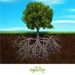 چالکود-کشاورزی ایران